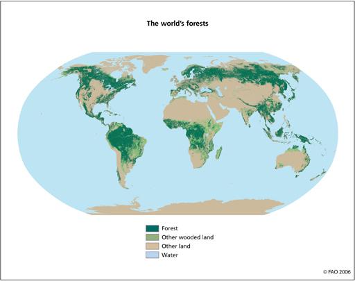 世界の森林2.jpg